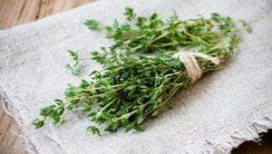 Bushel of lemon thyme, a plant known to repel mosquitoes.
